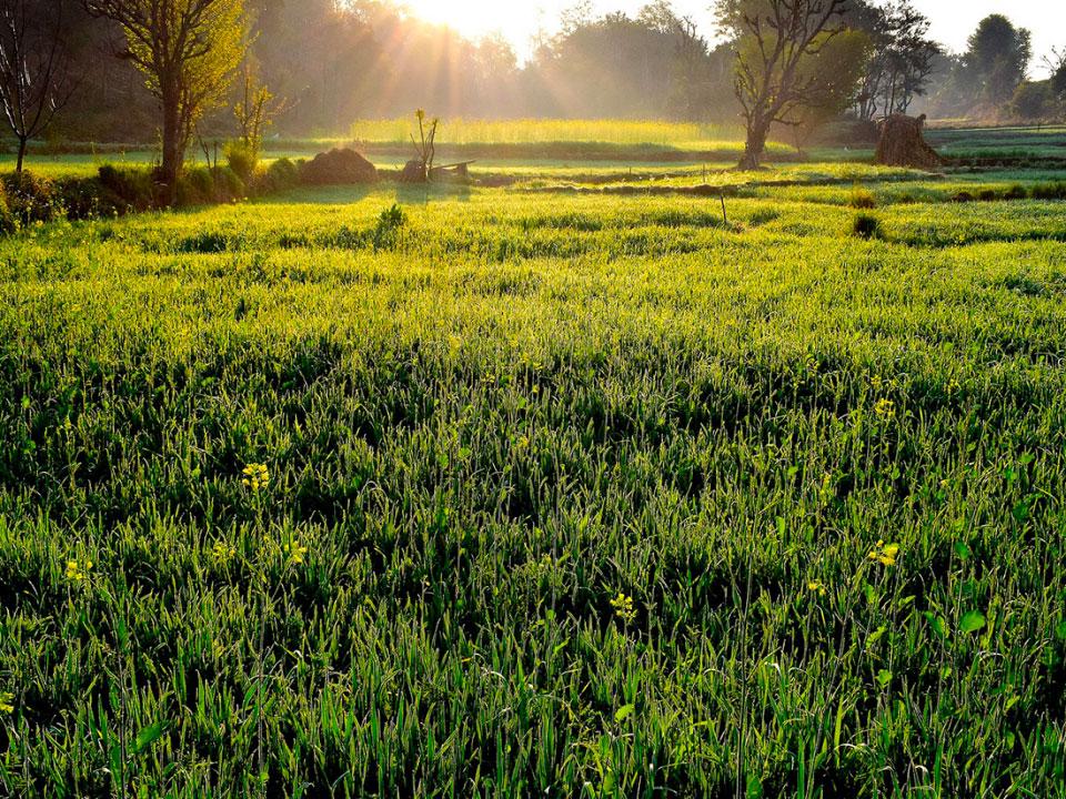 Zanzara stop il rimedio ecologico ed efficace contro le - Rimedi contro le zanzare in giardino ...