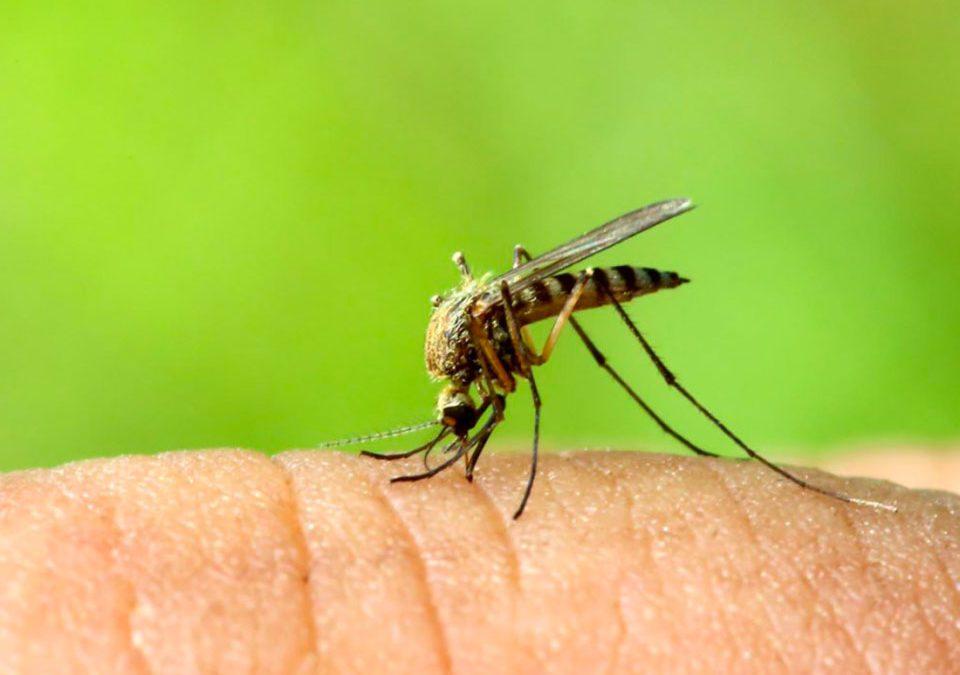 Rimedi naturali contro le punture di zanzare zanzarastop - Rimedi contro le zanzare in giardino ...